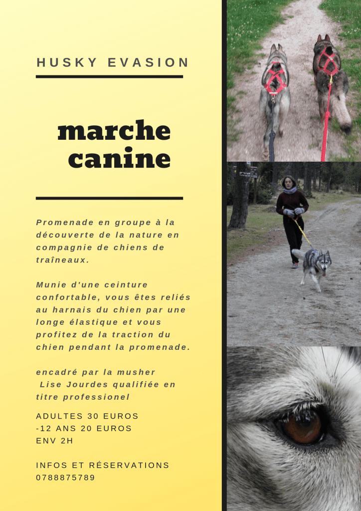 Activité cani-marche