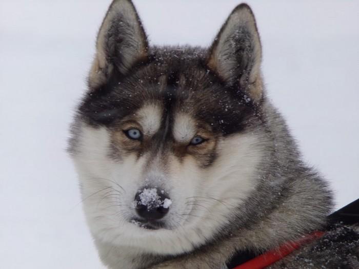 L'Yukon